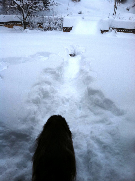 Winter Dogs in Conifer.JPG