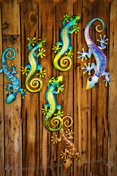 Geckos, Geckos, Everywhere!