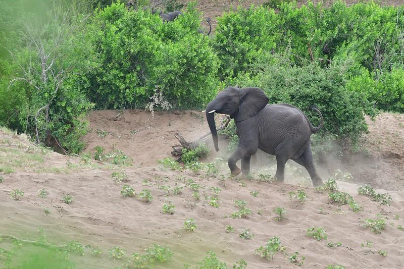 Elephants116.jpg