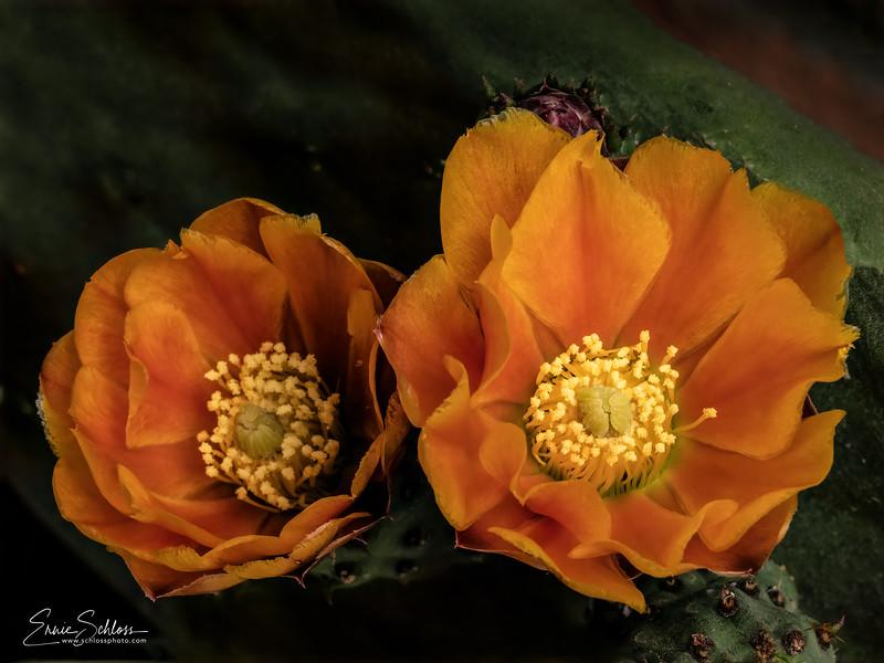 ITaos Pl Flowers 5-10-2019b-.jpg