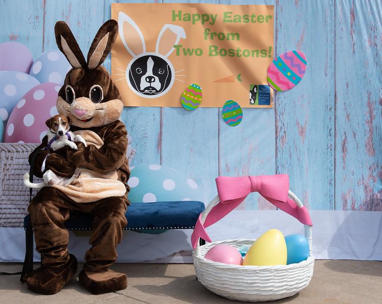 Easter2019TwoBostons-8234.jpg