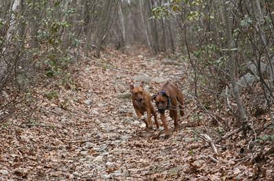 Dog Walk at Amy's April 2013