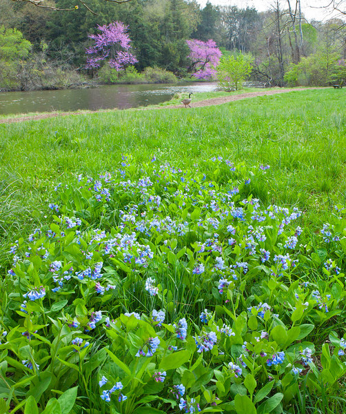 Spring12-1779-Edit-2 copy.jpg