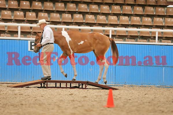 2014 03 01 WA Paint Horse State Championships Trail