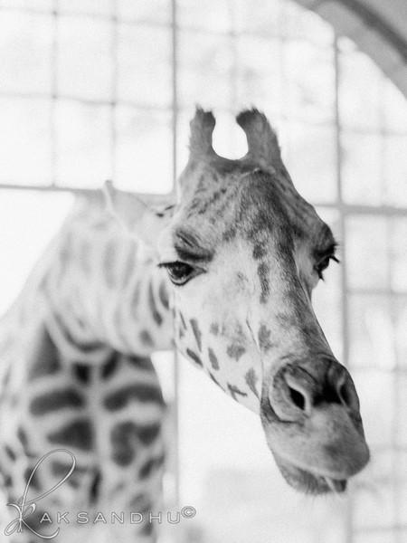 Safari-Africans-096.jpg
