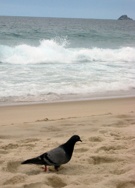 "So I asked around.  This is where I was directed--so what's the big deal, anyway?  Here she is--the ""Gull From Ipanema"".  Looks more like a pigeon anyway ...