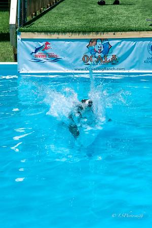 Splash 2 Saturday