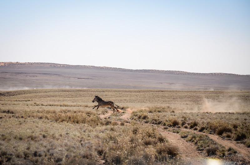 Namibia-4151.jpg