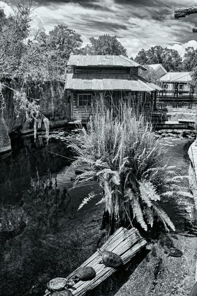 R_Tampa_Zoo-124_HDR-Edit-Edit.jpg