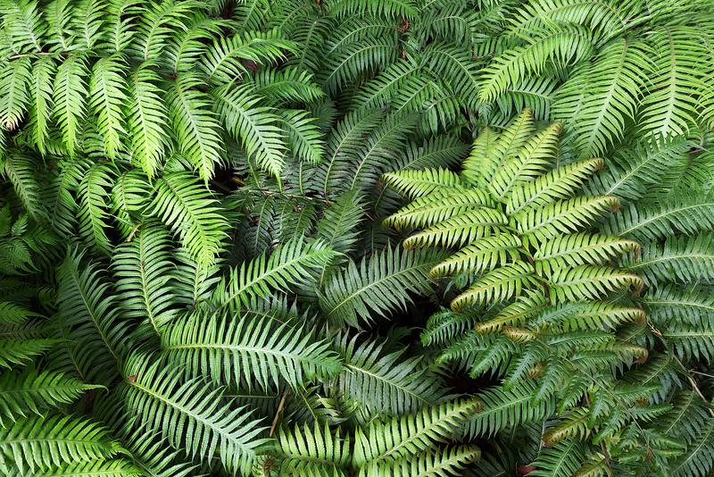 Fern Friends