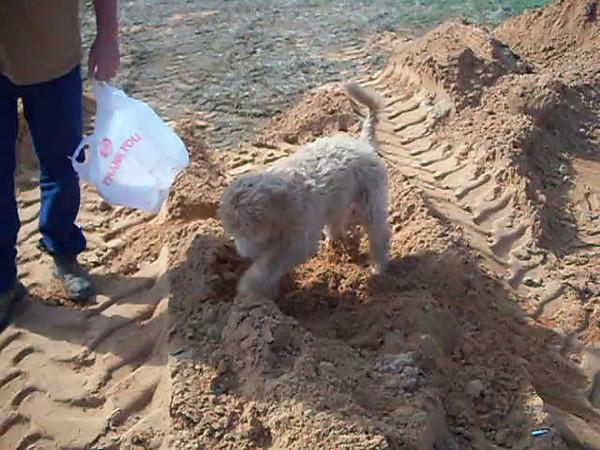 Winnie digging in the sand #2 2009-11.AVI