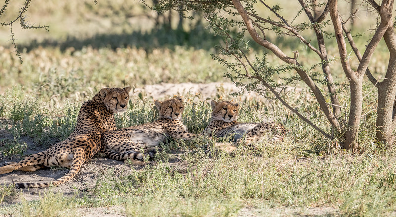 Tanzania_Feb_2018-62.jpg