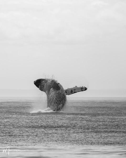 2019-08-31 - Whale Watching-0613_edit.jpg