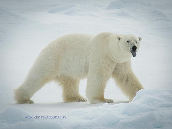 Svalbard, Arctic Norway 2014