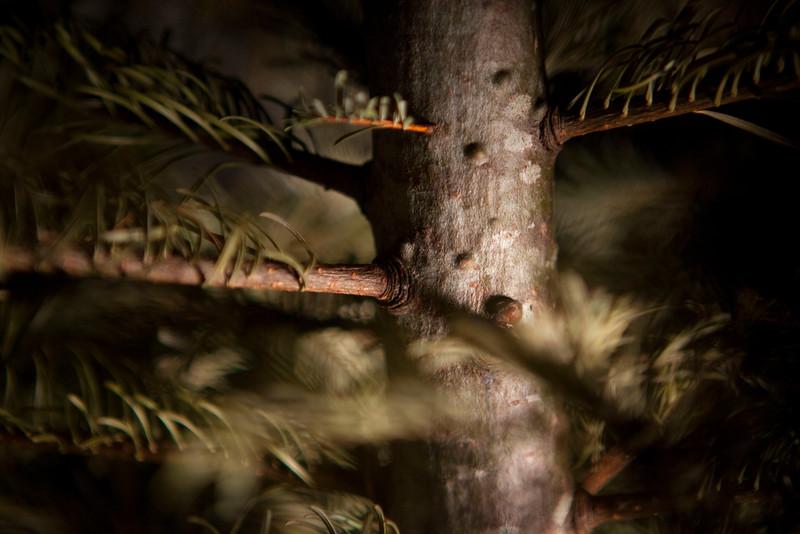 GrayR-ForestInstall20110209_0014.jpg