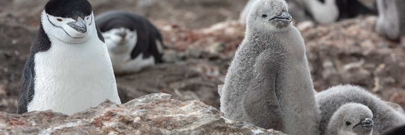 2019_01_Antarktis_01948.jpg
