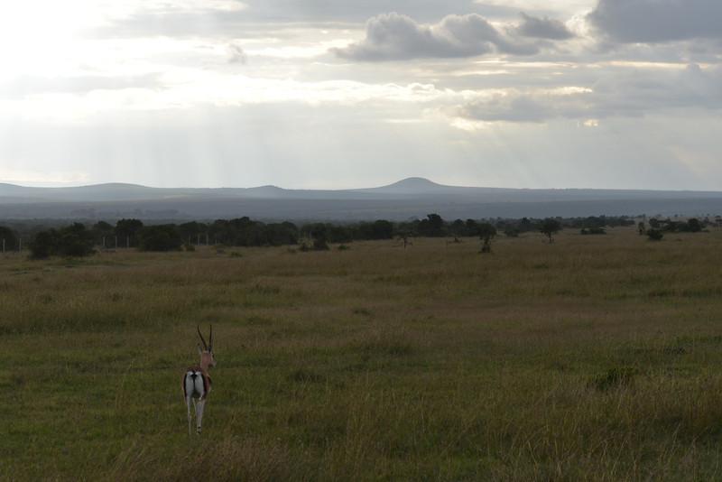 East Africa Safari 35.jpg