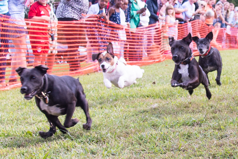 DRHC Kennel Party 9-13-15