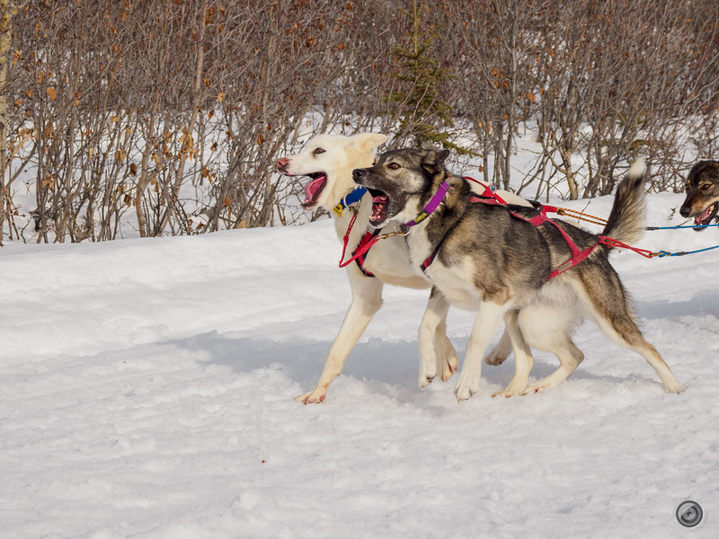 20190325_Blaire_and_Liz_Mushing_26.jpg