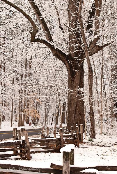 Snowy Elegance