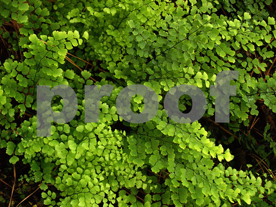 ferns-are-ideal-plants-for-areas-with-full-or-partial-shade
