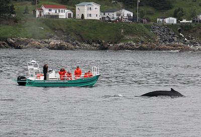 Newfoundland and Nova Scotia 2013