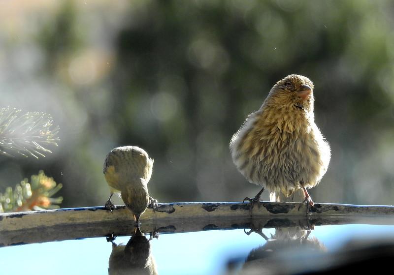 birds (217).JPG
