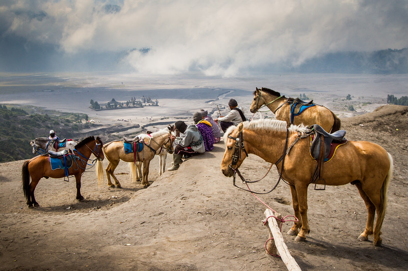 Horses wait to take people up Mt Bromo to make their offerings to the volcano god.