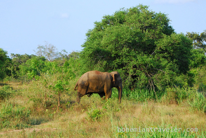 elephant in Habarana Eco Park (4).jpg