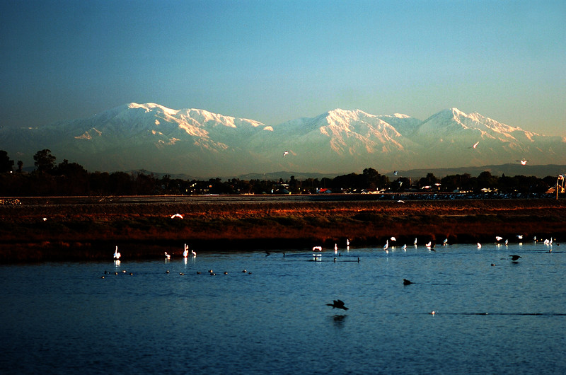 Bolsa Chica Wetlands Huntington Beach, California.jpg