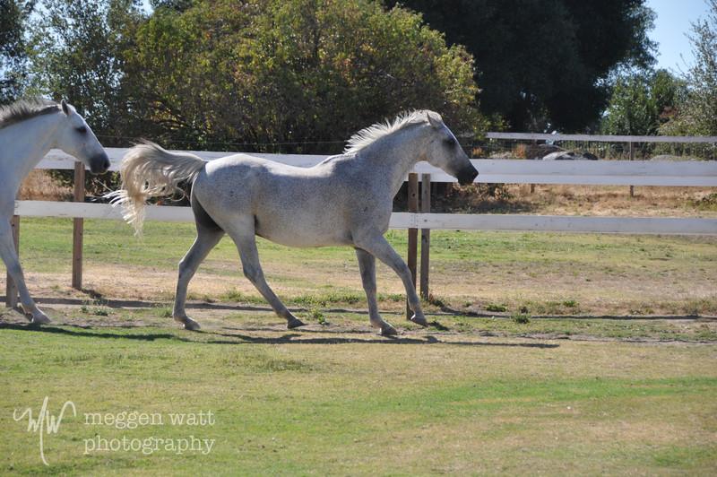 EB&Horses-121.jpg