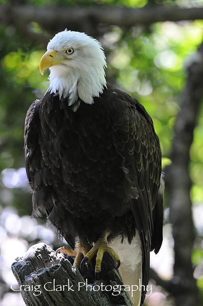 Portland Zoo 2010