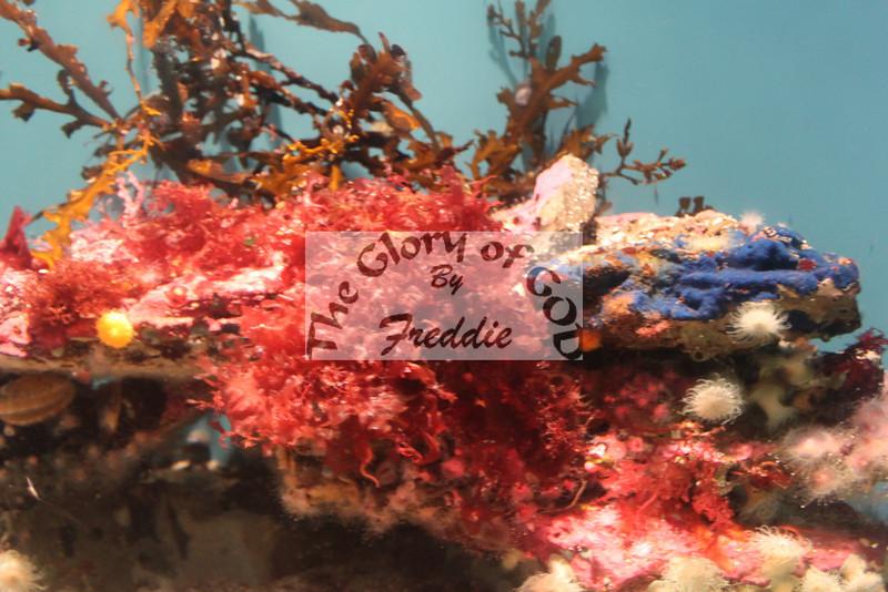 Aquarium 20015.jpg