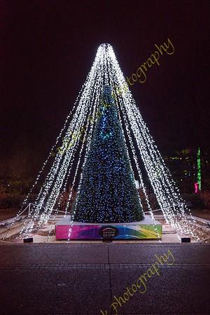 2019-12-08 - Garden Glow at Missouri  Botanical Garden
