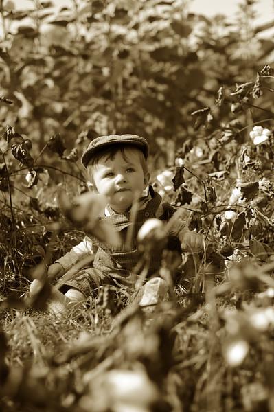 Jack in cotton field in 1920s
