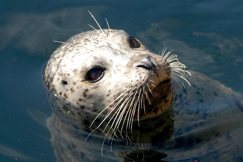 070904 8415B Canada - Victoria - Feeding seals and Mount Douglas _F _E ~E ~L.jpg