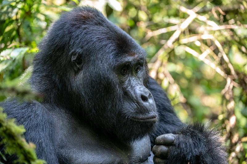 Uganda_T_Gor-1718.jpg
