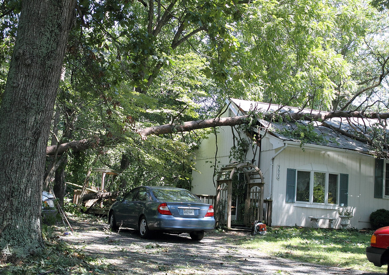 This is the house of Crissy's childhood friend.   There is a tree down in front AND in back if you look closely.