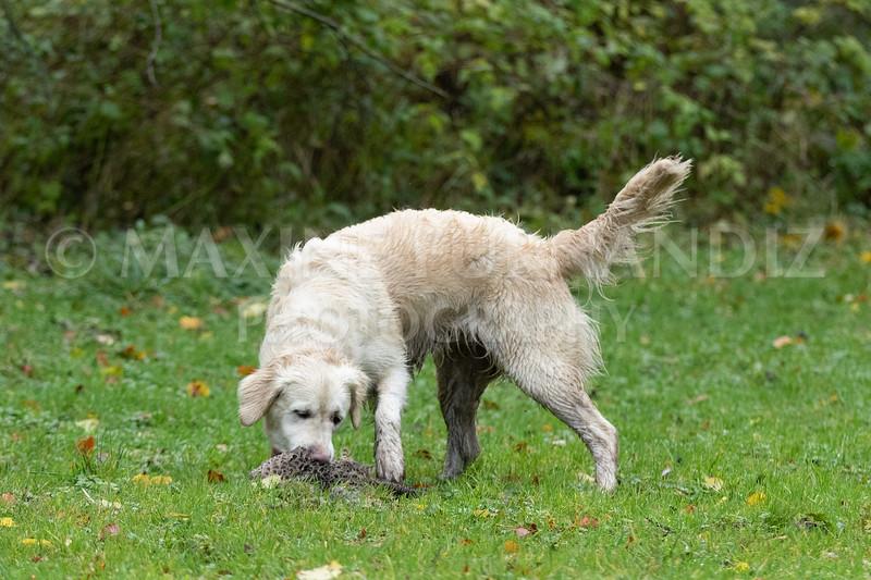 Dogs-4732.jpg