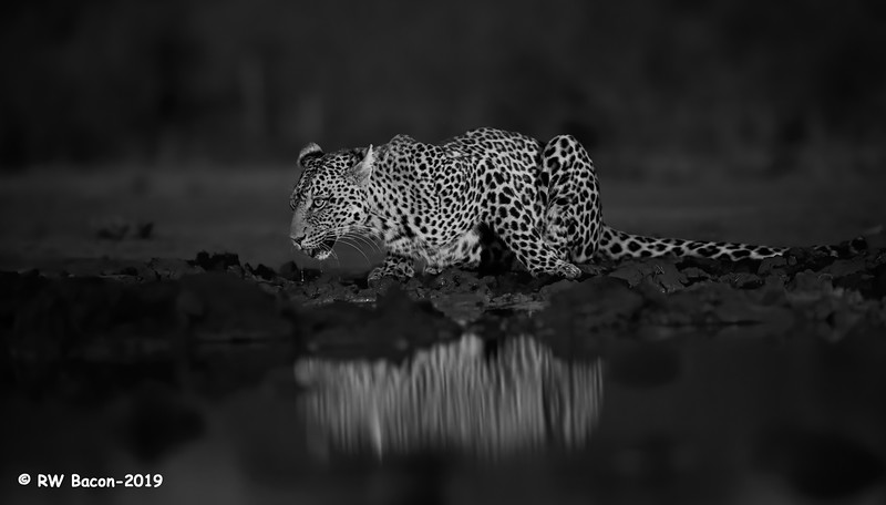 Twilight at the Waterhole BW.jpg