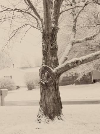 First Winter Snowstorm_2013