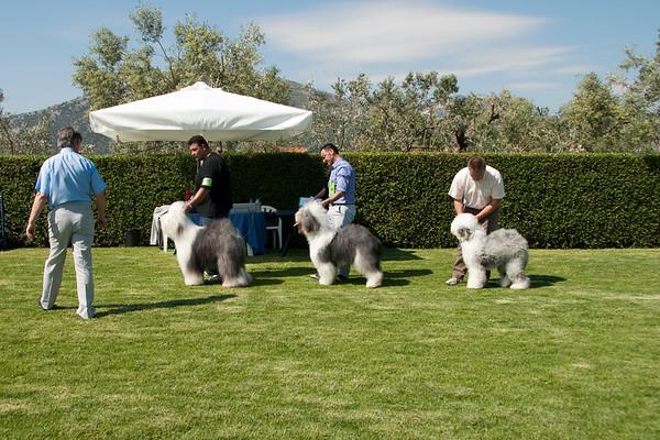 14-15 May 2011 KOE Dog Show