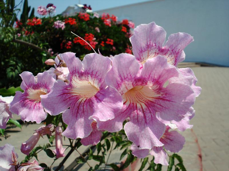 Herrera Museum Flowers 2.jpg