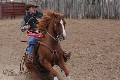 Versatility Horse 2009