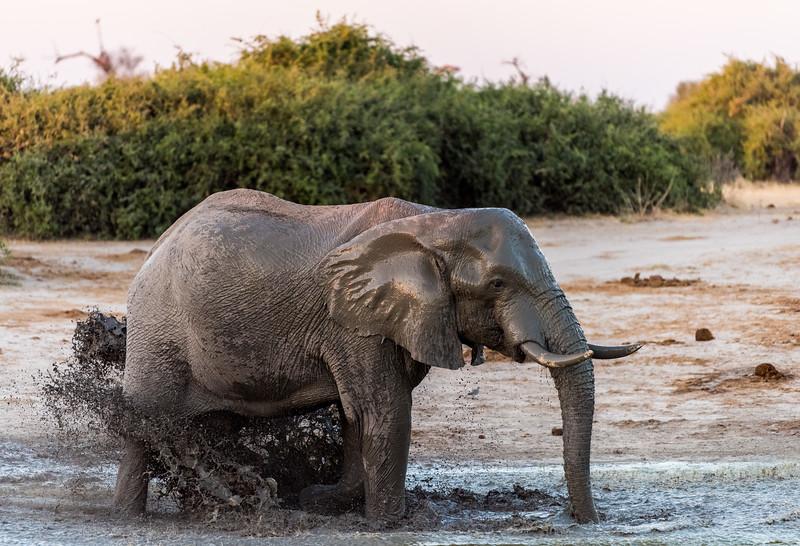 Botswana_June_2017 (4246 of 6179).jpg