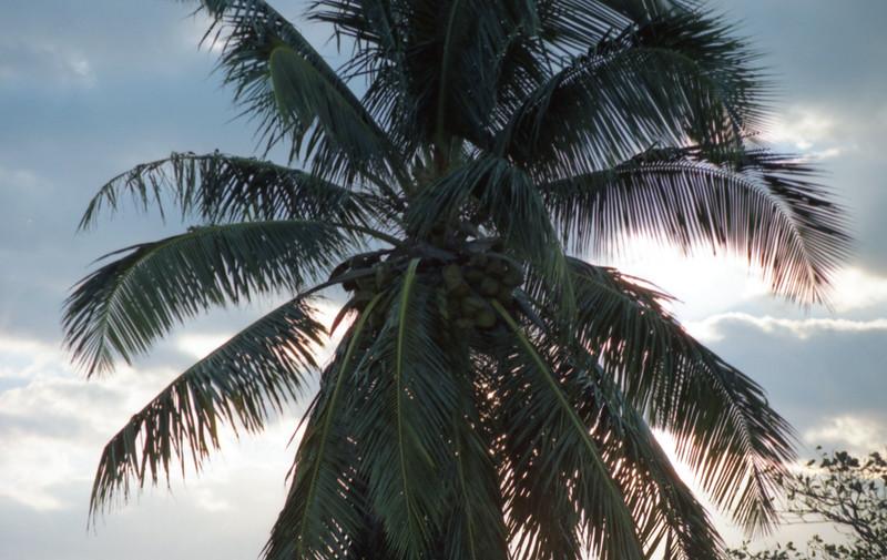 1990-12 7-00 Bahamas180.jpg