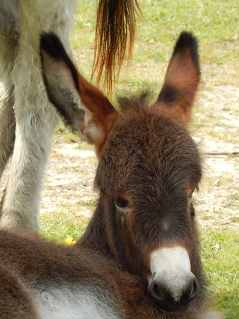 Delightful Donkeys