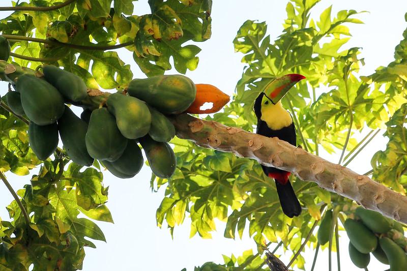 Pratt_Belize Farm_10.jpg