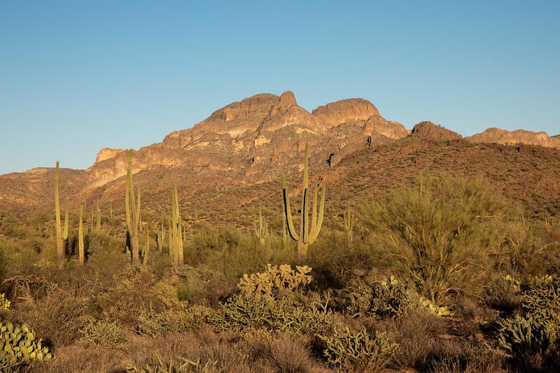 WVWS_Saguaro Cactus-3816.jpg