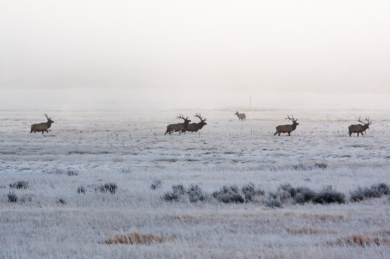 Five Stags